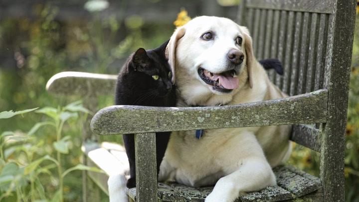 pets video